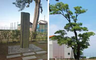 Ichiburi Customs Gate and Hackberry Tree
